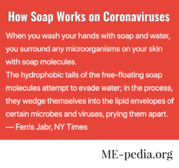 "How Soap Works on Coronaviruses. ""When you wash your hands with soap and water, you surround any microorganisms on your skin with soap molecules. The hydrophobic tails of the free-floating soap molecules attempt to evade water; in the process, they wedge themselves into the lipid envelopes of certain microbes and viruses, prying them apart."" - Ferris Jabr, New York Times"