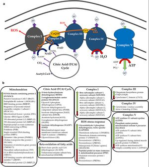 Complex diagram of labeling proteins found to be different in ME/CFS