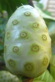Photo of a pale yellow-green fruit shaped like an oval.